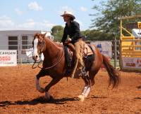View images of horses and equestrian equipment while browsing