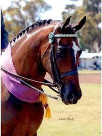 Add images to your Horsezone classifieds and auctions